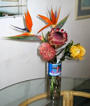 Maui flowers, including Protea