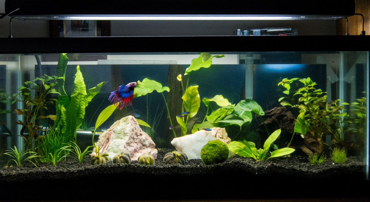 20 gallon planted tank all the pages are my days for 20 gallon long fish tank