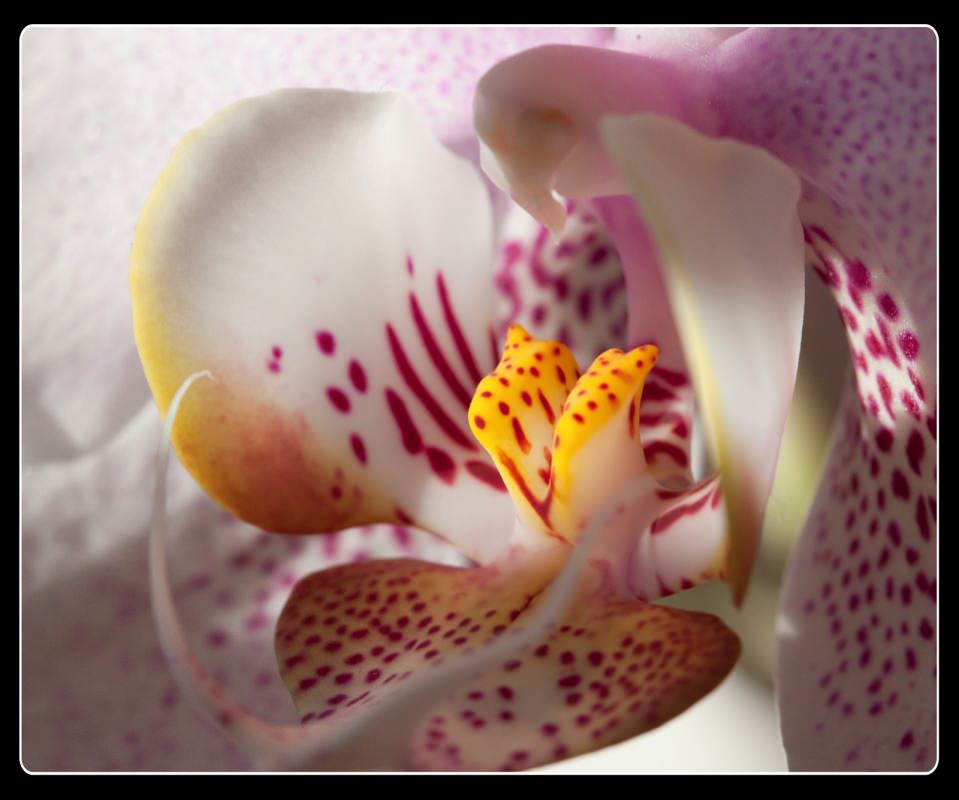 2014 Favorites: Orchid Close Up