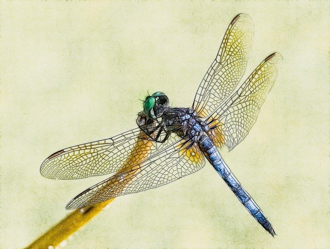 2014 Favorites: Damsel Fly