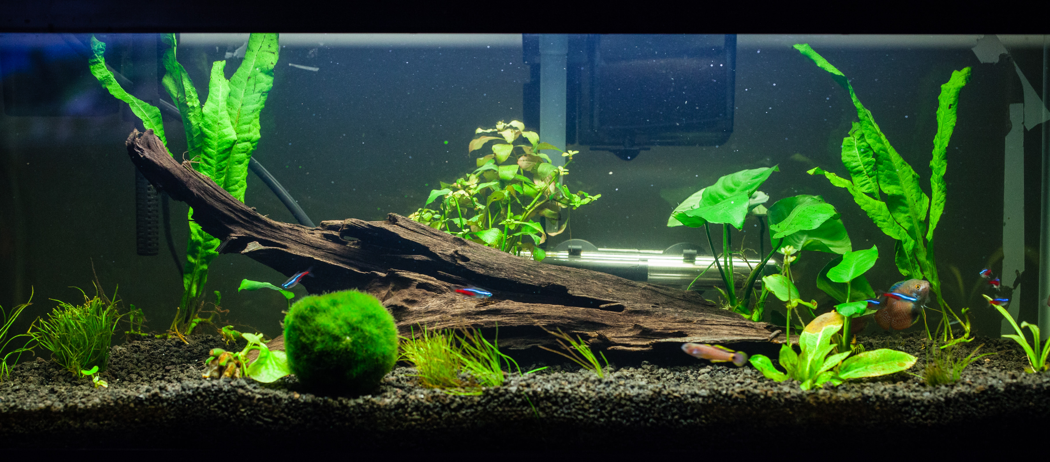 20 gallon planted tank at 3 months all the pages are my days. Black Bedroom Furniture Sets. Home Design Ideas