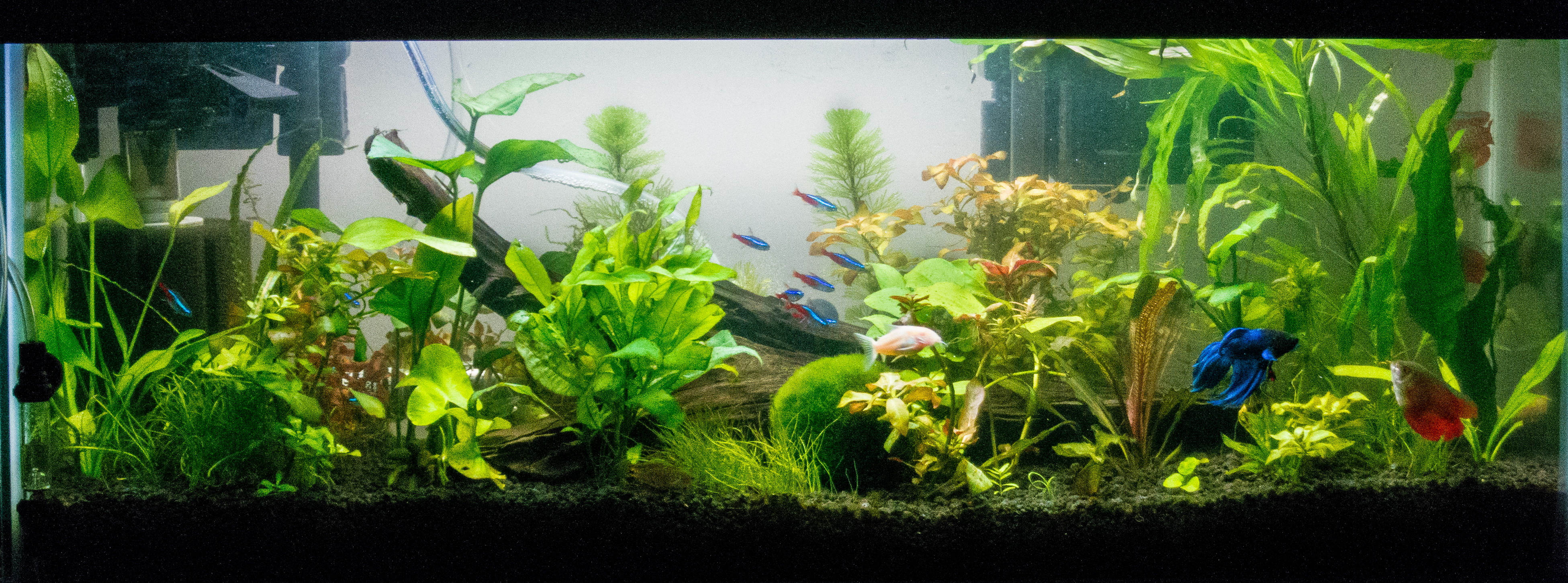20_gallon_planted_tank-sm-7