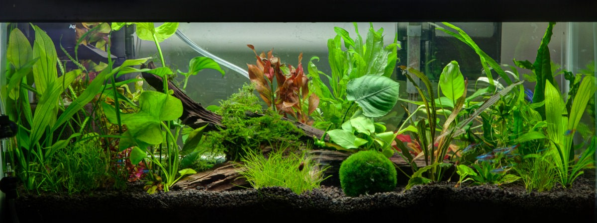 20 gallon planted tank