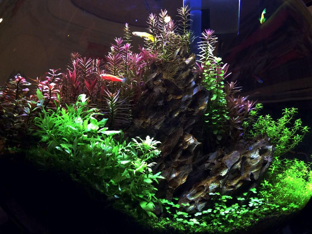 Planted Tank at Chef Chu's
