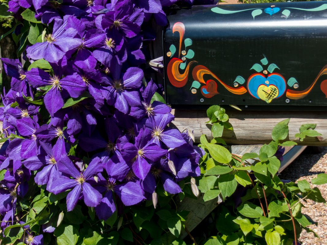 Lindsborg Spring Flowers