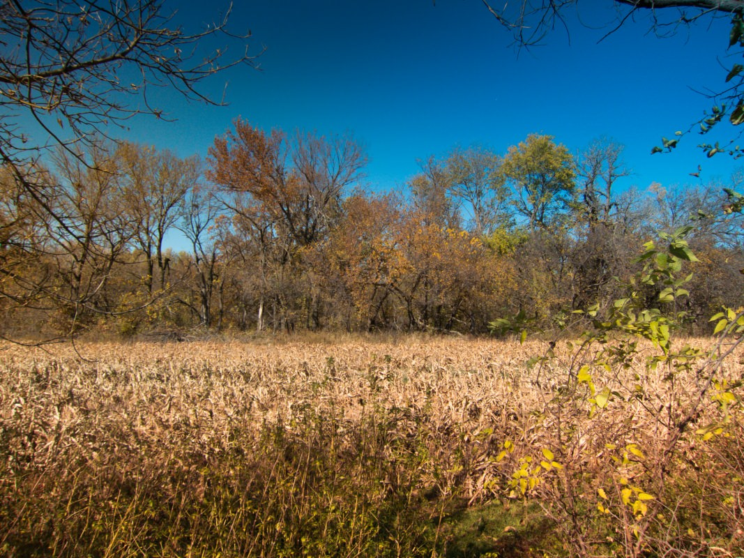 Meadowlark Trail Ride