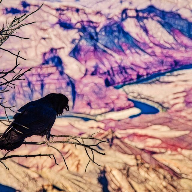 Grand Canyon Crow
